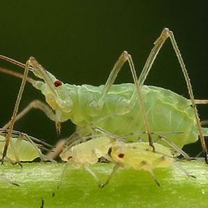 Traitement insecticide anti punaises de lit le kit lyon punaises - Insecticide mouche de l olive ...